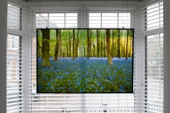 Bluebells in the woods - printed onto clear perspex